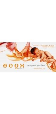 comer bien en el embarazo
